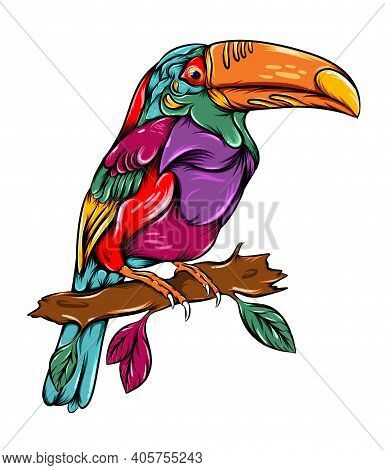 The Zentangle Tropical Toucan Perch On The Branch