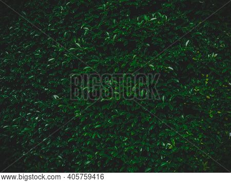 Green Leaves Natural Wall Background With Vignetting