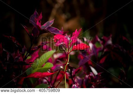 Complementary Colors Found In Beautiful Nature Image