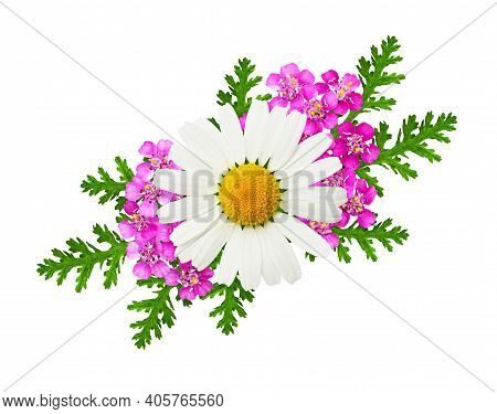 Daisy And Pink Yarrow Flowers And Leaves In A Floral Arrangement Isolated On White