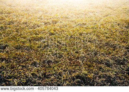 Fantastic Background Of Grass Covered With White Crystal Frost From Frost
