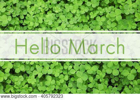 Hello March. Green Clover Leaves As Background