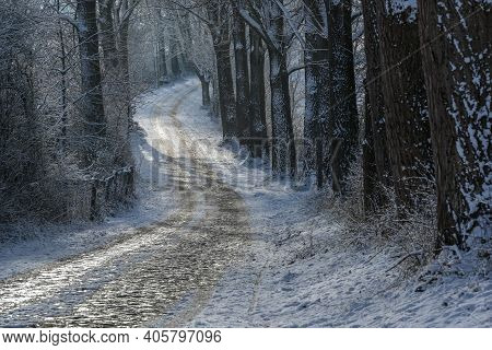 Narrow Curvy Country Road From Cobblestone In Winter Covered With Ice And Snow Between Dark Tree Tru