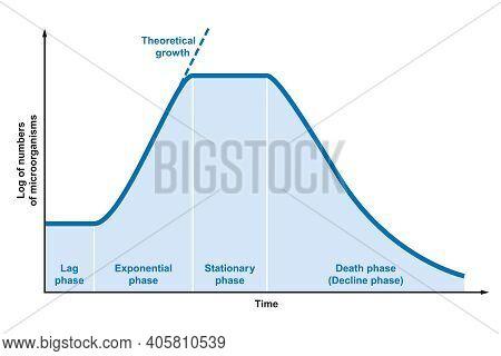 Growth Curve Of Microorganisms. Ideal Kinetic Curve Of A Static Culture Of Microorganisms Such As Ba