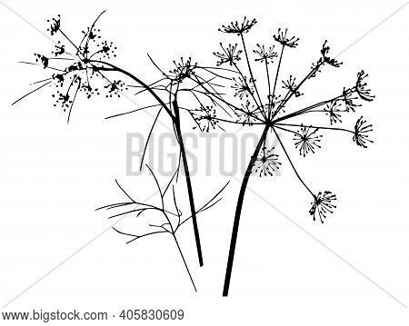 Vector Drawing Of A Sprig Of Dill. Ink Sketch. Manual Work. Great Idea For Postcard, Calendar, Holid