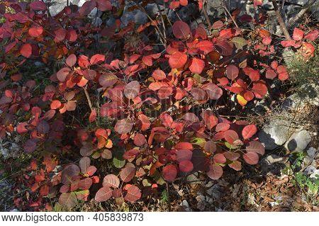 Autumn Colours Near Malchina In Friuli-venezia Giulia In North East Italy
