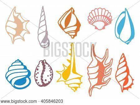 Set Of Seashells. Tropical Underwater Mollusk Shells Decorative Illustration.