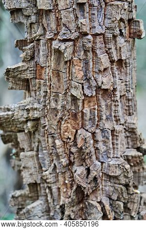 Details Of The Fire Resistant Bark Of An Exotic Topical Tree At The Buraco Das Aras, Brazil, With A