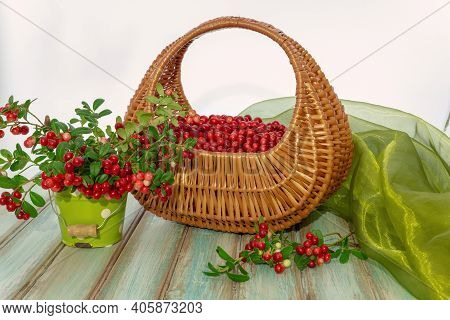 Red Ripe Cranberries In A Beautiful Wicker Basket And Sprigs Of Berries On A Wooden Table. Cranberri