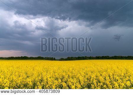 Oilseed Rape Field. Сanola With Blue Sky