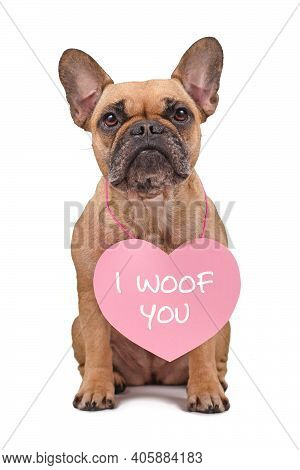 French Bulldog Dog With Valentine's Day Heart With Text I Woof You Around Neck Isolated On White Bac