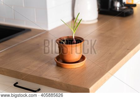 Pot With Onion And Garlic Herbs On Kitchen Wooden Counter. Sustainable Lifestyle. Zero Waste. Clear