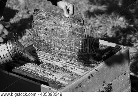 Beekeeper's Hands Work As A Smoker Against The Background Of Colored Beehives. Black And White Photo