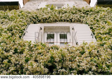 A Close-up Of A Window With Open Jasmine Shutters.