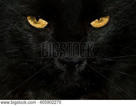 Black Cat Eyes Macro Close Up. Yellow Eyes Of Black Cute Cat Face Portrait. Feline Eyes Of Cat Head