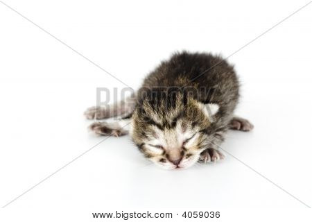 Very Young Kitten Sleeping
