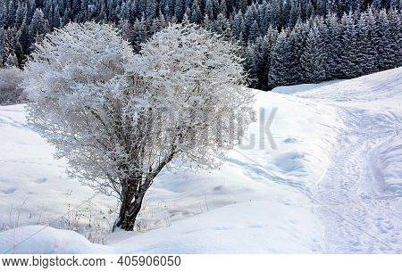Heart Shape Tree In Winter Snow White Scene Landscape. Snow And Heart Tree Of Love, Winter In Blue S