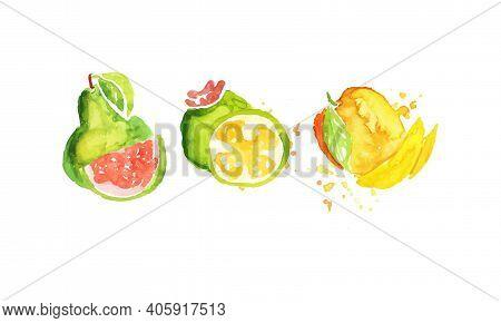 Fresh Juicy Ripe Guava, Mango Fruits Hand Drawn Watercolor Painting Vector Illustration