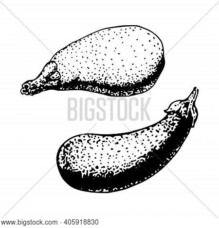 Eggplant Vector Sketch Icon Isolated On Background. Hand Drawn Eggplant Icon. Eggplant Sketch Icon F