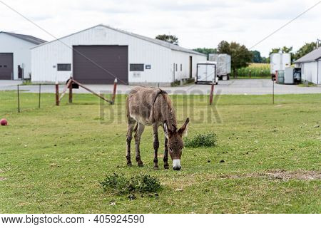 Photo Of Donkey Grazing Grass At The Canadian Food And Agriculture Museum