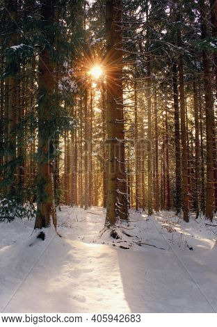 Beautiful Winter Forest With Sunlight Within Sunset.