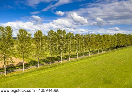 Traditional Countryside Scene In The Netherlands With Windbreak Lane Of Poplar Trees In The Wind Und