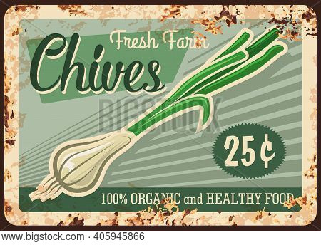 Chives Vegetable Metal Plate Rusty, Farm Herbs And Food, Market Price, Vector Retro Poster. Natural