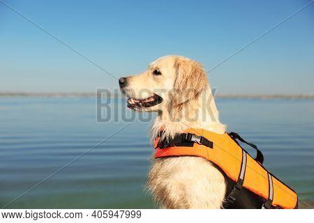 Dog Rescuer In Life Vest Near River, Closeup