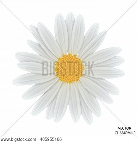Chamomile Flower Top View. Close Up Daisy. Vector Eps 10.