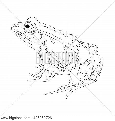Frog. Drawing Of A Frog In Black And White. Frog Coloring Book.