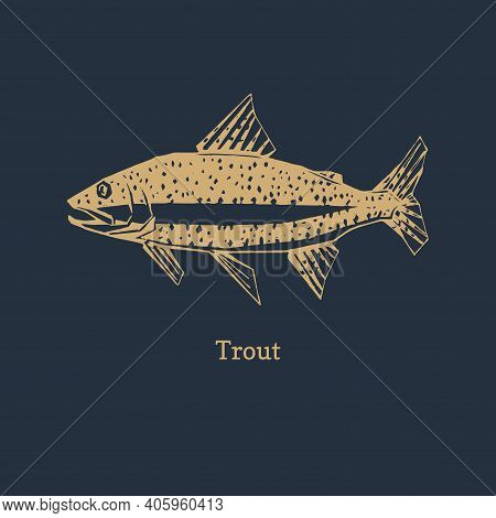 Trout Illustration In Vector. Logo For Packaging.