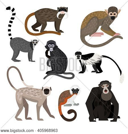 Different Monkey Set. Cartoon Primates Of Wildlife, Funny Zoo Characters, Colobus Ring-tail Lemur Bo