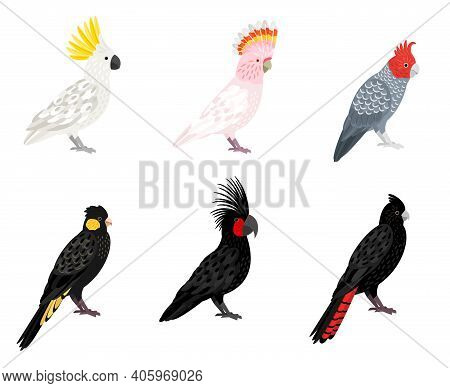 Parrots Cockatoo. Cartoon Tropical Winged Birds, Parakeets With Beaks And Colored Feathers, Vector I