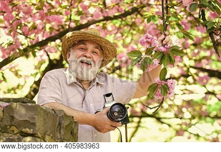 Blossoming Of The Apricot. Cherry Blossoming Garden. Photographer Taking Photo Of Apricot Bloom. Spr