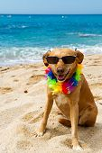 Relaxing dog at the beach with flowers garland poster
