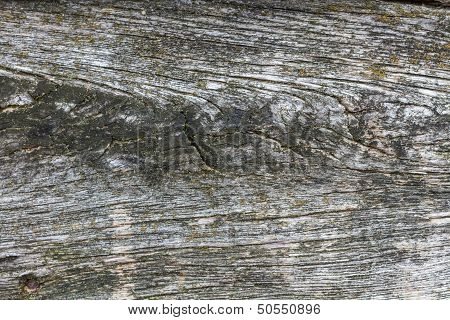 Wooden Plank With Moss And Branch Holes