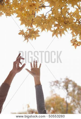 Young Couple Reaching for Gingko Leaves