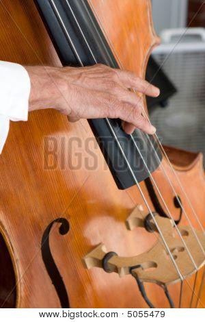 Bass Fiddle Player