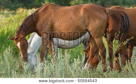 Many Horses On Green Meadow