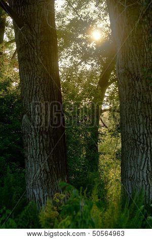 Deep Forest At Evening