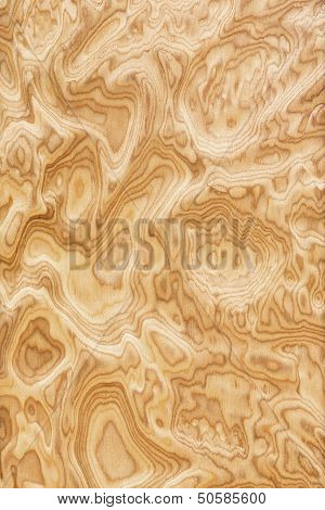 Close up real burl wood grain texture background poster