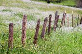 Old barb wire and wooden fence with wood pecker damage in calfornia March 20 2009 poster