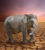 elephant in the arid lands  poster