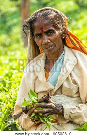 Woman With Tea Leafs