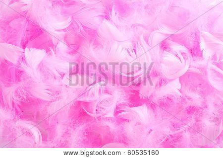 closeup of a pile of soft pink feathers