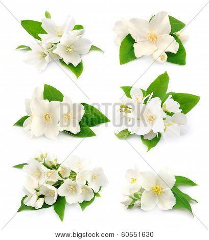 Set Of  Jasmine
