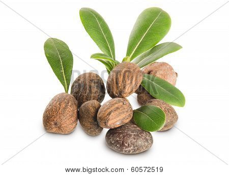 Group Of Shea Nuts And Leaves