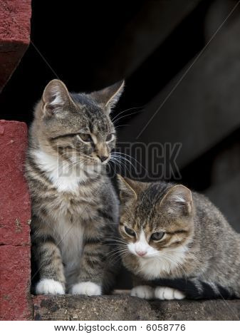 Kittens on a Farm