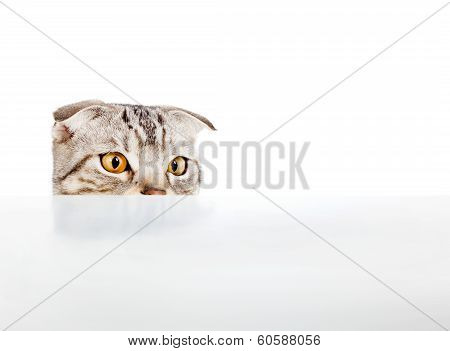 Adorable Cat Stared Something On The Table