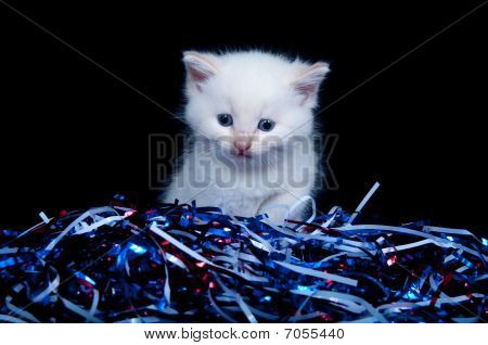 Cute gray kitten with red white blue streamers for Fourth of July poster